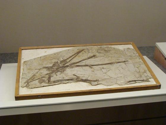 翼竜展に行こう 子供と楽しむ化石